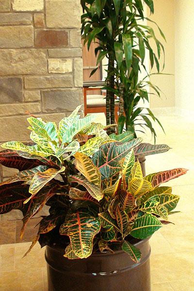 plant scape design